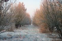 Truffière sous la neige